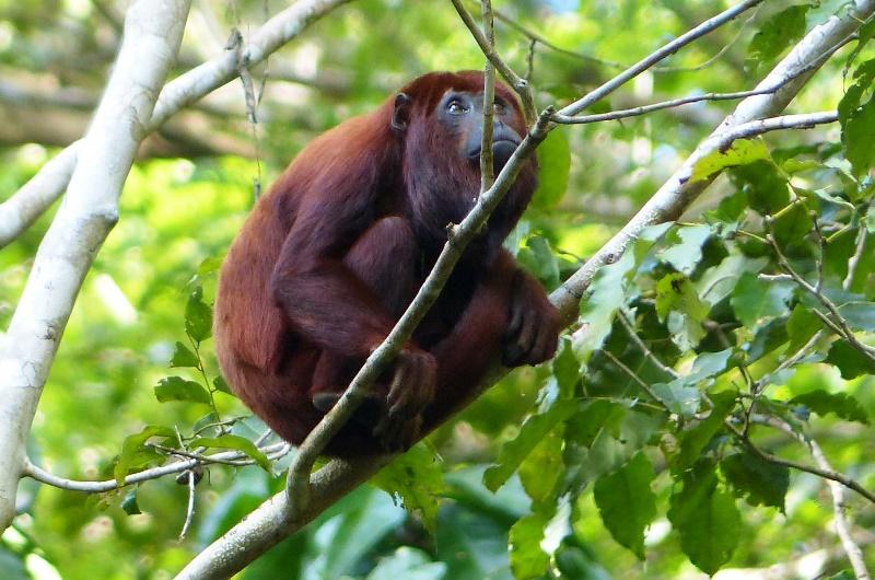 monkeyb
