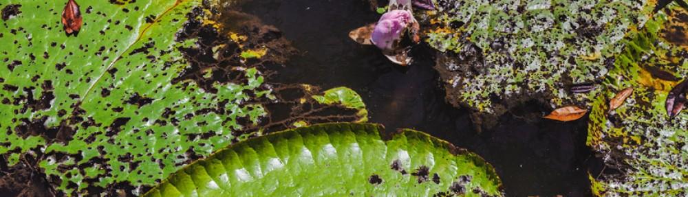 Amazonas by Viverde Blog